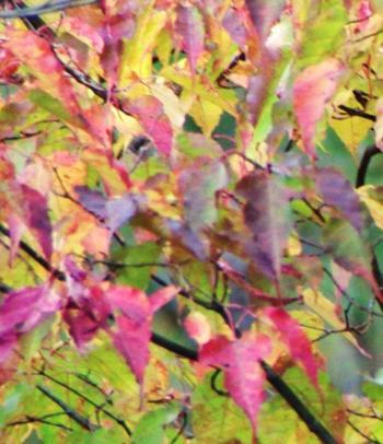 東京の秋22
