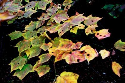 東京の秋23