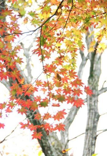 東京の秋25