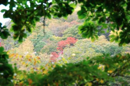 東京の秋27