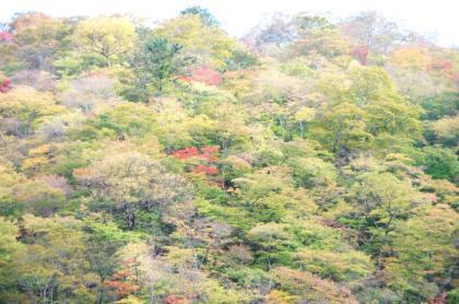 東京の秋31