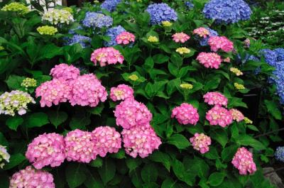 yamashina31_convert_20090705143708.jpg