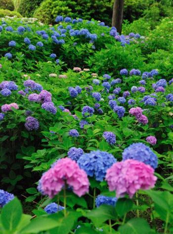 yamashina8_convert_20090705142951.jpg