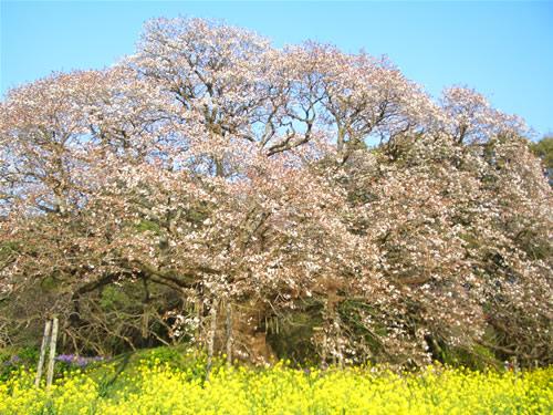 yositaka.jpg