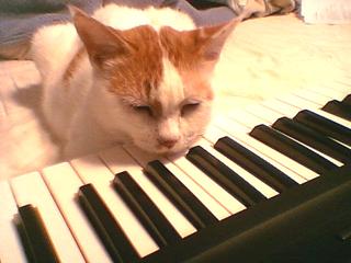 ピアノとおいら