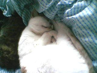 寝るピカソ