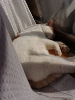 寝ているピカソ