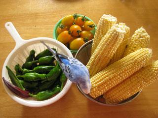 家庭菜園収穫02