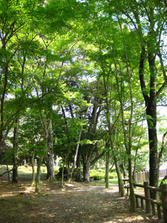 曽木の滝03
