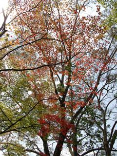 曽木の滝04