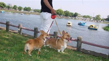 ピコムギ江津湖をバックに