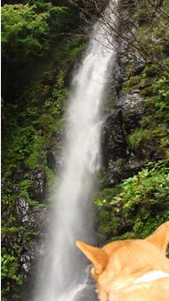 ピコたんと滝