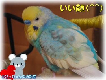 (*^0゜)v ☆彡