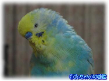 (^_-)---☆Wink