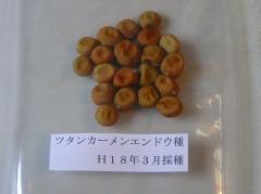 ツタンカーメンの種。