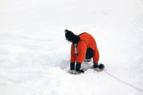 大雪1の1