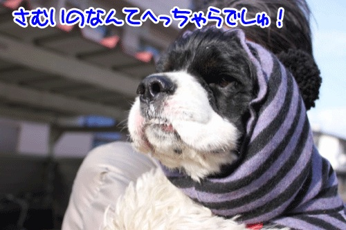 強風5の1