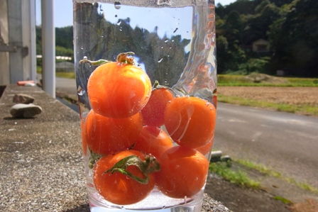 111001トマト水に沈む。