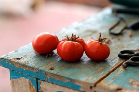 120215 tomato