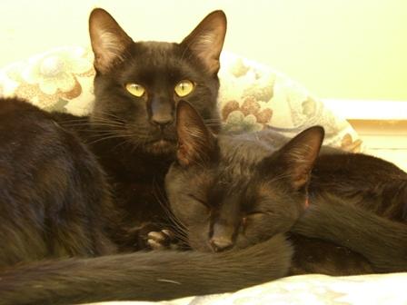 ジル&キティ3