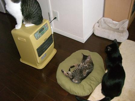 拾い猫_ユズ11