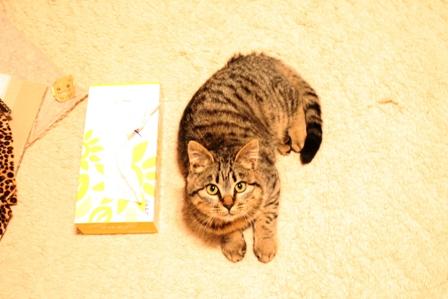 拾い猫ーらん3