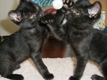ジル&キティ1