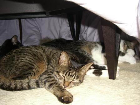 ネコだまり2009