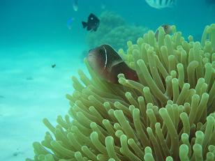 タイ・タオ島・ダイビング・ナンユアン島・ビーチダイビング