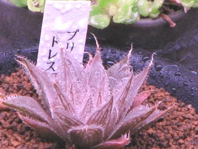 植物育成灯ビオルックスHG下