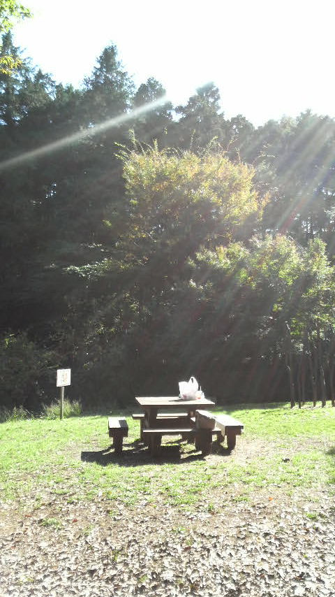 2008111公園2