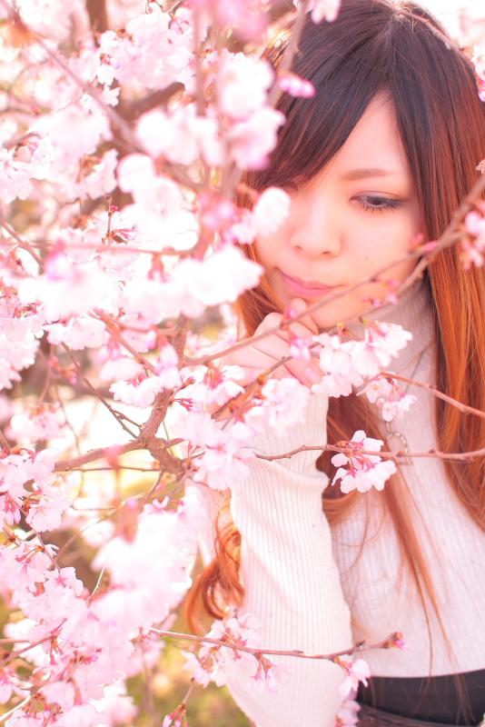 sakura91.jpg