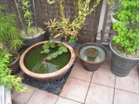 睡蓮鉢とメダカ