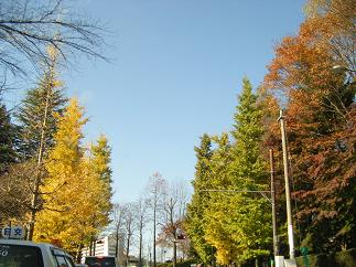 仙台は秋色