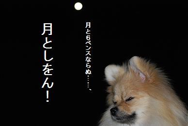 月としをん1