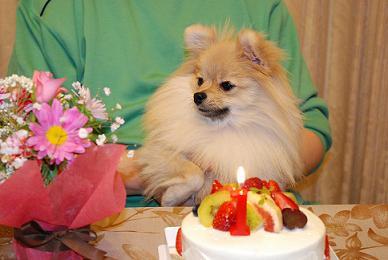 ケーキとしをん