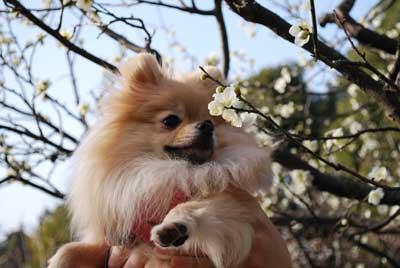 梅を嗅ぐ娘2