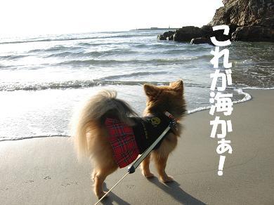 これが海かぁ!
