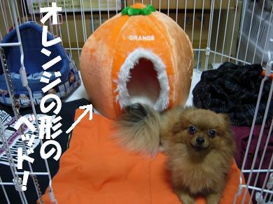 オレンジの形のベッド!