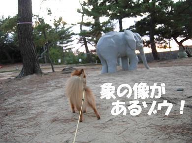 象の像があるゾウ!