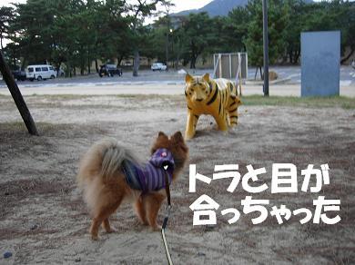 トラと目が合っちゃった