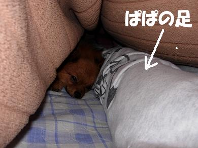 足にくっついて寝るりおん
