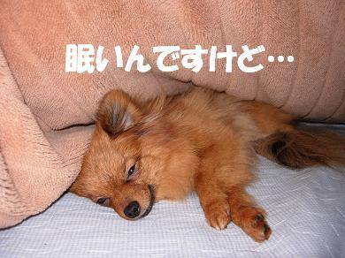眠いんですけど…