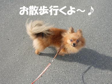 お散歩行くよ~♪