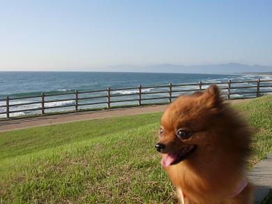 海と芝生とりおん