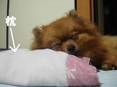 枕ですやすや