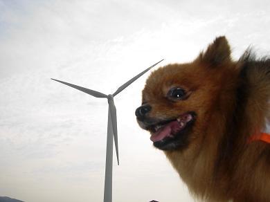 風車とりおん