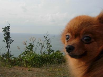 日本海とりおん