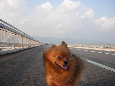 橋を渡るりおん