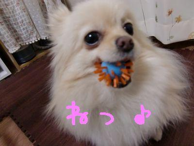 CIMG3178_20111120020155.jpg
